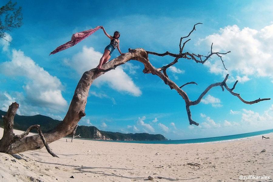 Pohon Instagram Pantai Tarimbang