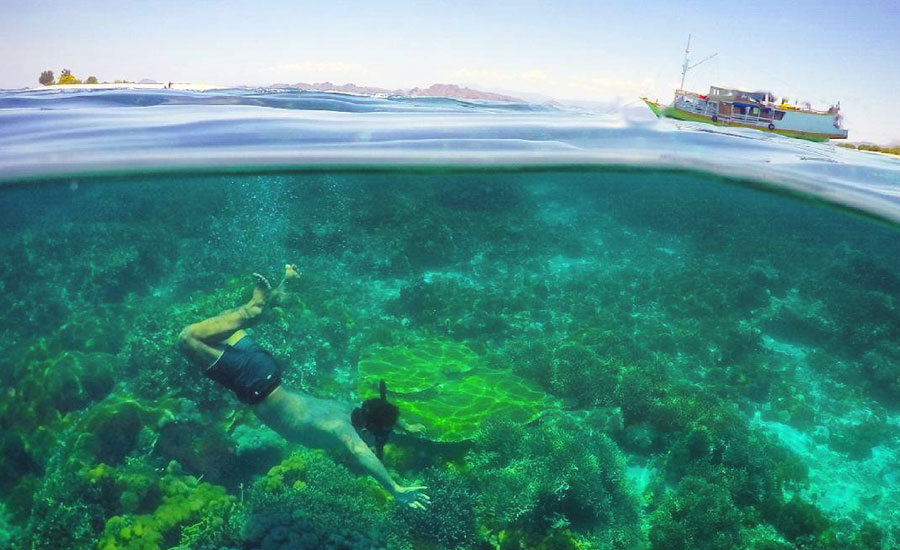 Gorgeous Split-Shot Underwater Photos to Make You Want to Flores